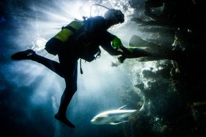Here's How to Catch Up on the 2018 Scuba Diving Hype