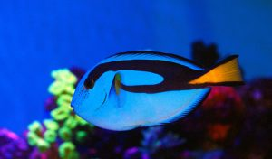Top 5 Most Colorful Fish Species